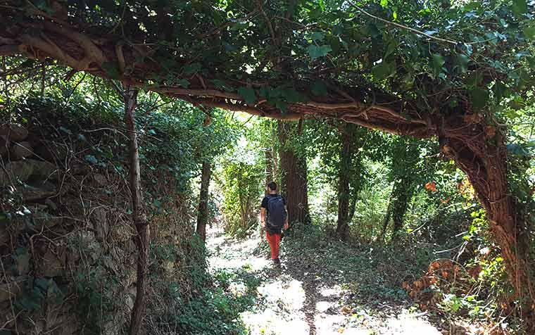 escursioni guidate santuario madonna di bonora escursioni montefiore
